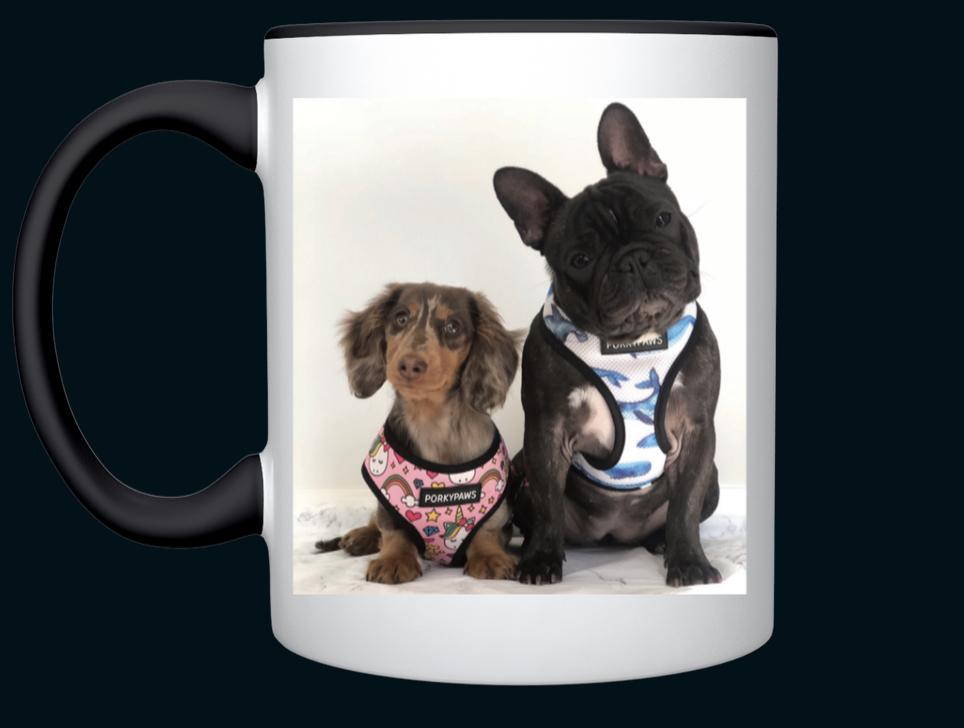 Dachshund And French Bulldog